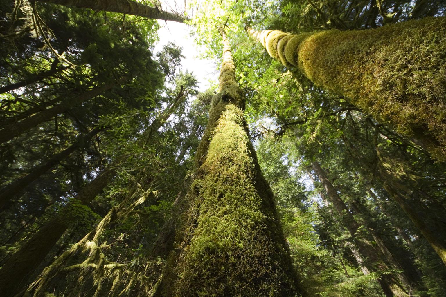 氷河を抱いた山の麓には、苔に覆われた温帯林が広がる zoom 氷河を抱いた山の麓には、苔に覆われ